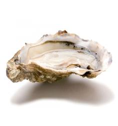 """</br><b>""""Stai per bere il sale della vita..... dal mare.""""</br>(Mireille Giuliano) </br></br>""""De toutes les passions la seule vraiment respectable me parait être la Gourmandise""""  </br>(Guy de Maupassant)</b>"""