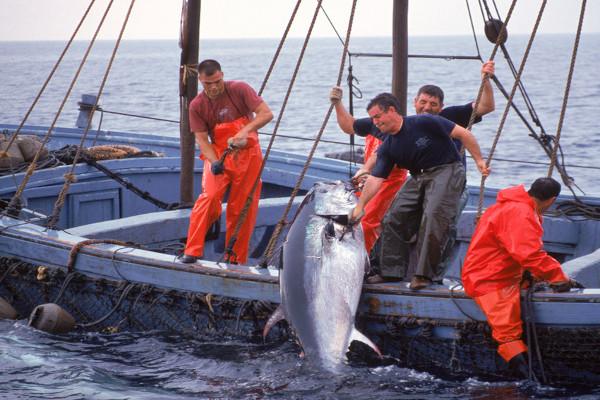 pesca-tonno6x4